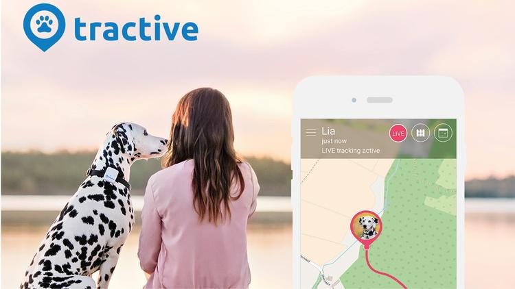 Werbebild: Ein Dalmatiner und eine Frau sitzen am Steg eines Gewässers. Im Vordergrund ist ein Smartphone mit der tractive App abgebildet.